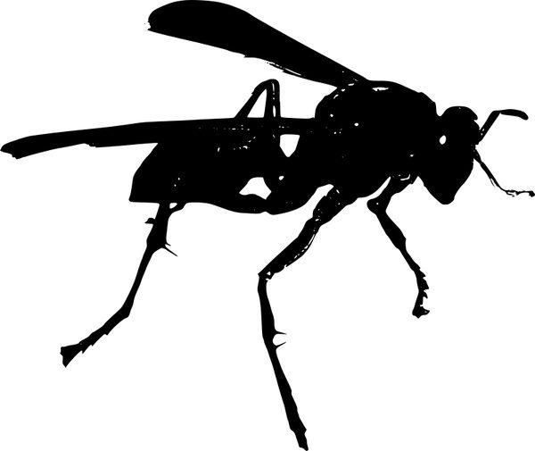 The Predatory Wasp